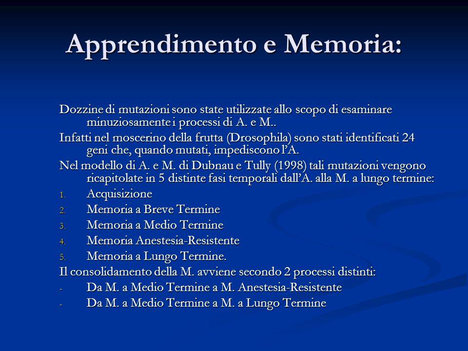 Apprendimento e Memoria: