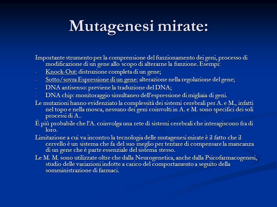 Mutagenesi mirate: