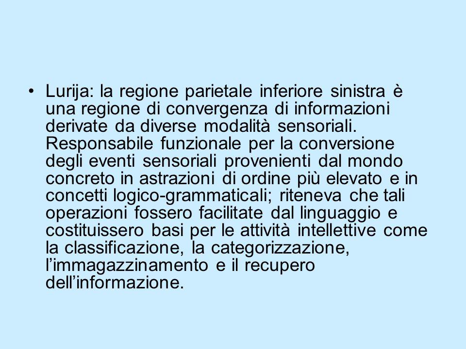 Lurija: la regione parietale inferiore sinistra è una regione di convergenza di informazioni derivate da diverse modalità sensoriali.
