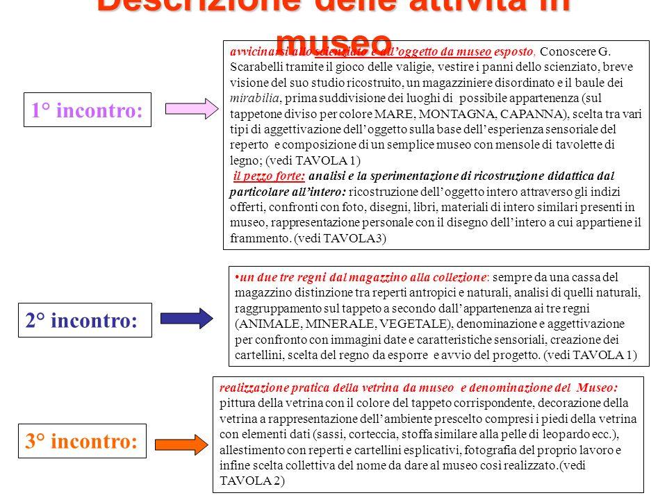 Descrizione delle attività in museo