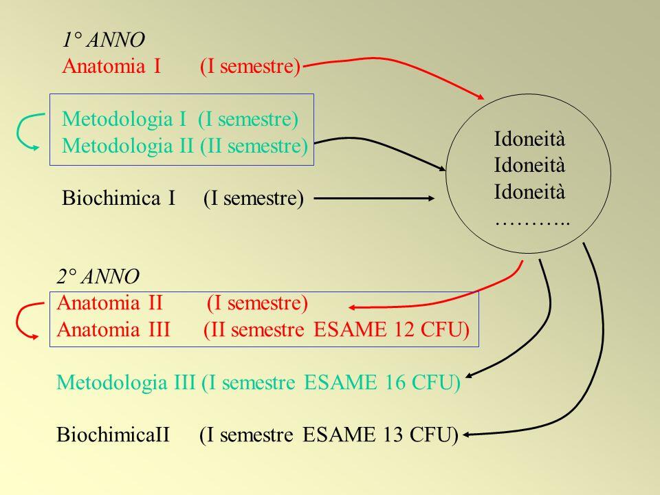1° ANNO Anatomia I (I semestre) Metodologia I (I semestre) Metodologia II (II semestre) Biochimica I (I semestre)