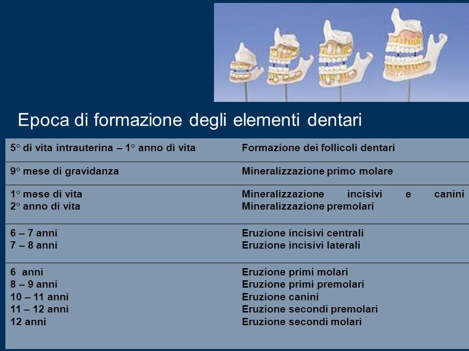 Epoca di formazione degli elementi dentari