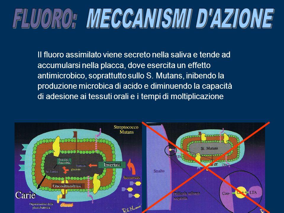 FLUORO: MECCANISMI D AZIONE