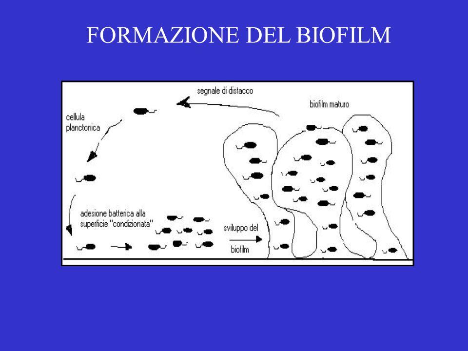 FORMAZIONE DEL BIOFILM