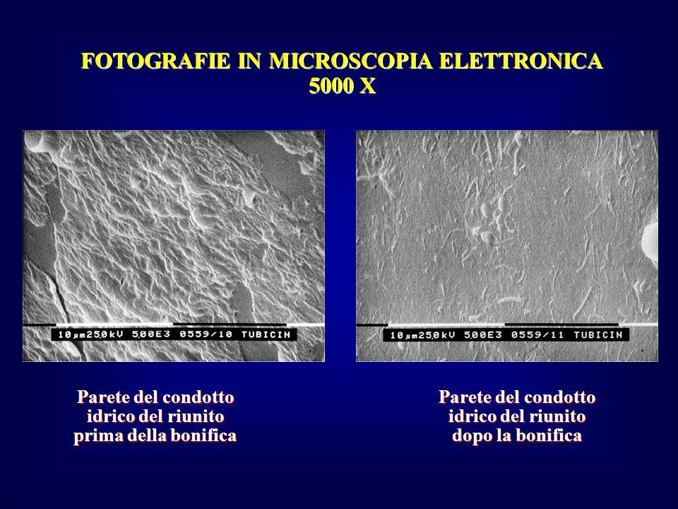 FOTOGRAFIE IN MICROSCOPIA ELETTRONICA 5000 X