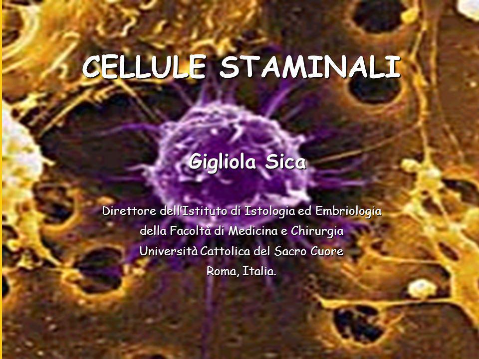 CELLULE STAMINALI Gigliola Sica