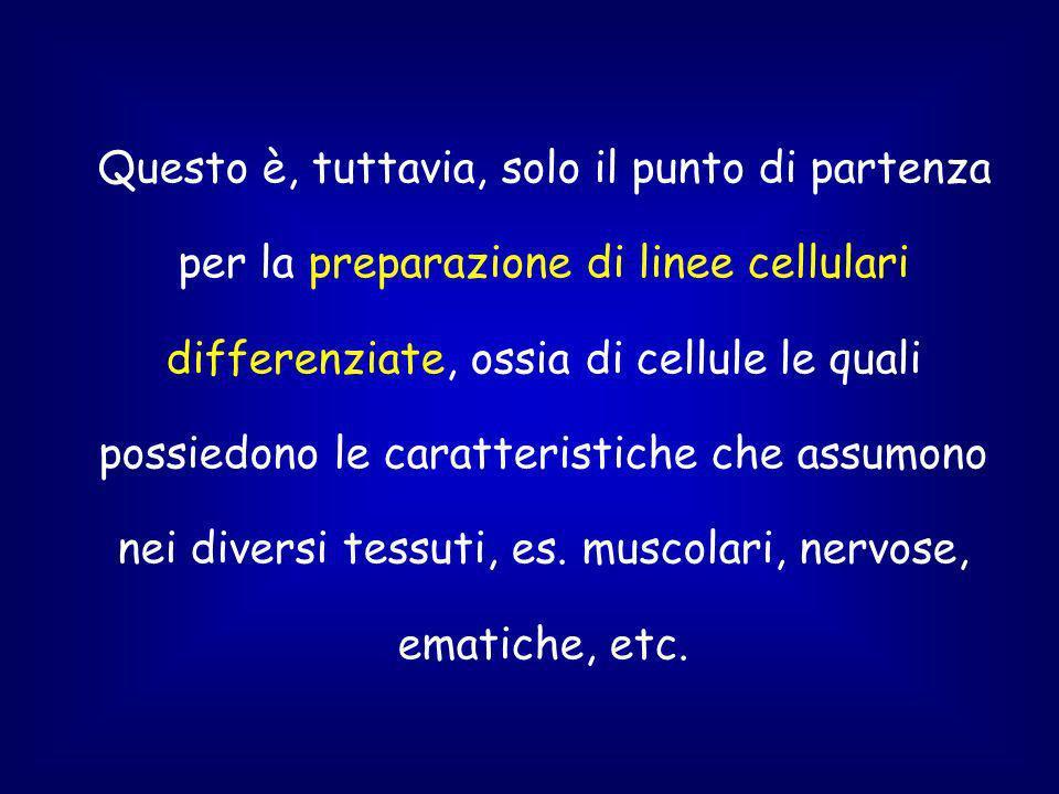 Questo è, tuttavia, solo il punto di partenza per la preparazione di linee cellulari differenziate, ossia di cellule le quali possiedono le caratteristiche che assumono nei diversi tessuti, es.