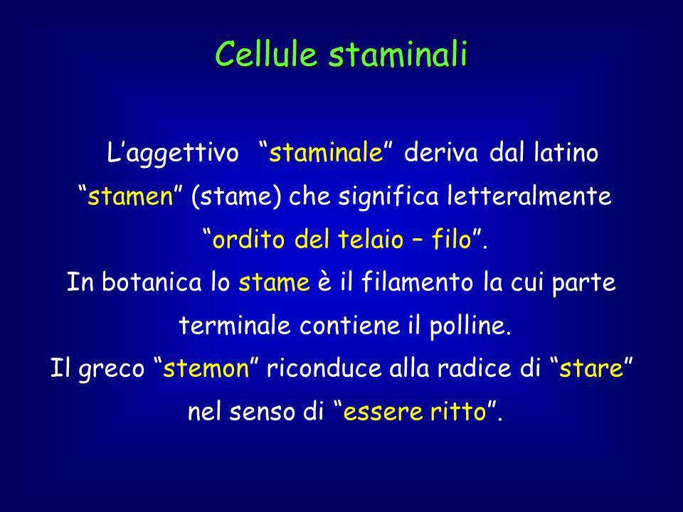 Cellule staminali L'aggettivo staminale deriva dal latino stamen (stame) che significa letteralmente ordito del telaio – filo .