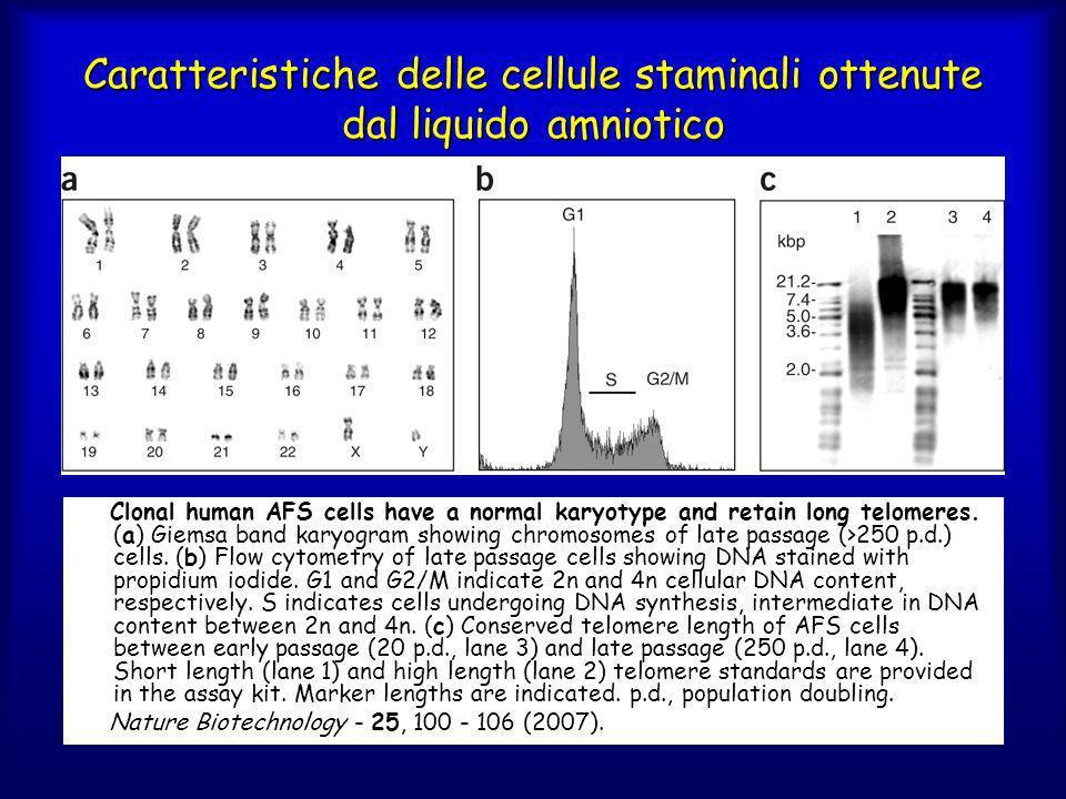 Caratteristiche delle cellule staminali ottenute dal liquido amniotico