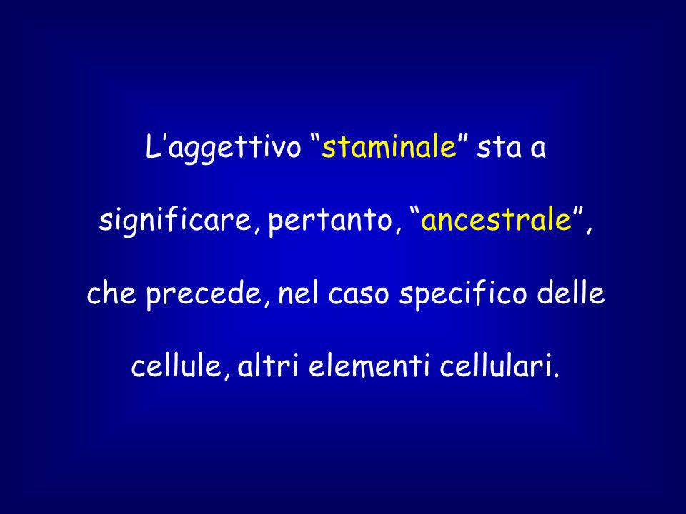 L'aggettivo staminale sta a significare, pertanto, ancestrale , che precede, nel caso specifico delle cellule, altri elementi cellulari.