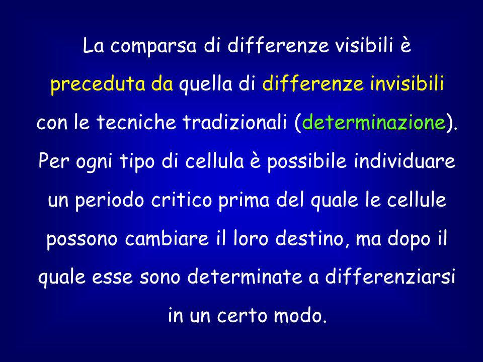 La comparsa di differenze visibili è preceduta da quella di differenze invisibili con le tecniche tradizionali (determinazione).