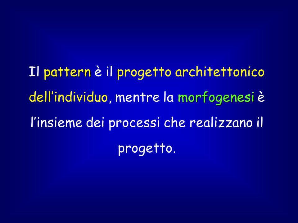 Il pattern è il progetto architettonico dell'individuo, mentre la morfogenesi è l'insieme dei processi che realizzano il progetto.