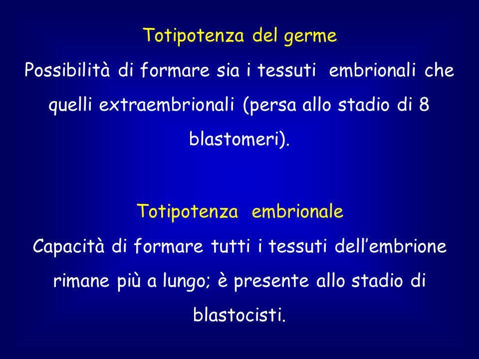 Totipotenza del germe Possibilità di formare sia i tessuti embrionali che quelli extraembrionali (persa allo stadio di 8 blastomeri).