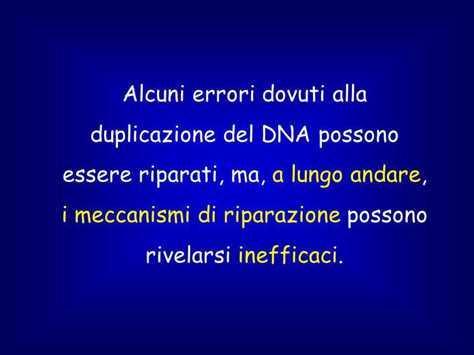 Alcuni errori dovuti alla duplicazione del DNA possono essere riparati, ma, a lungo andare, i meccanismi di riparazione possono rivelarsi inefficaci.