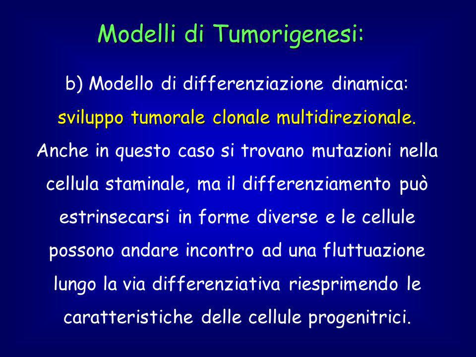 Modelli di Tumorigenesi: