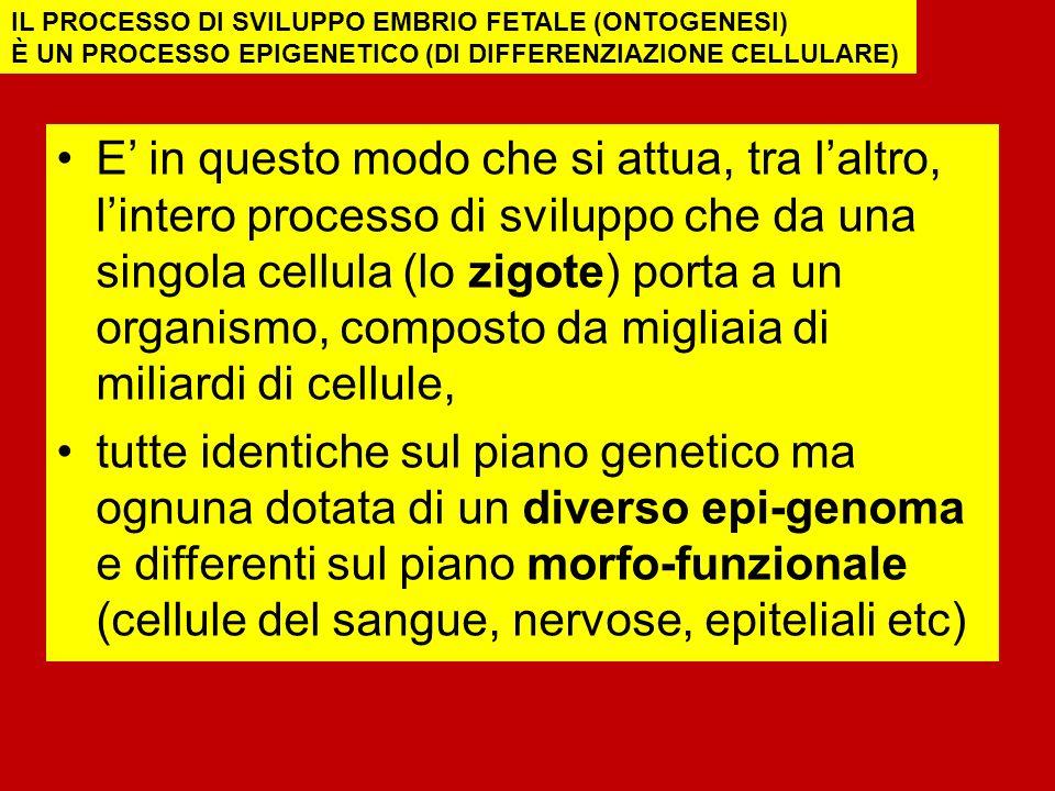 IL PROCESSO DI SVILUPPO EMBRIO FETALE (ONTOGENESI)