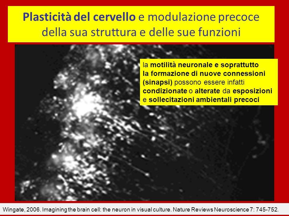 Plasticità del cervello e modulazione precoce della sua struttura e delle sue funzioni