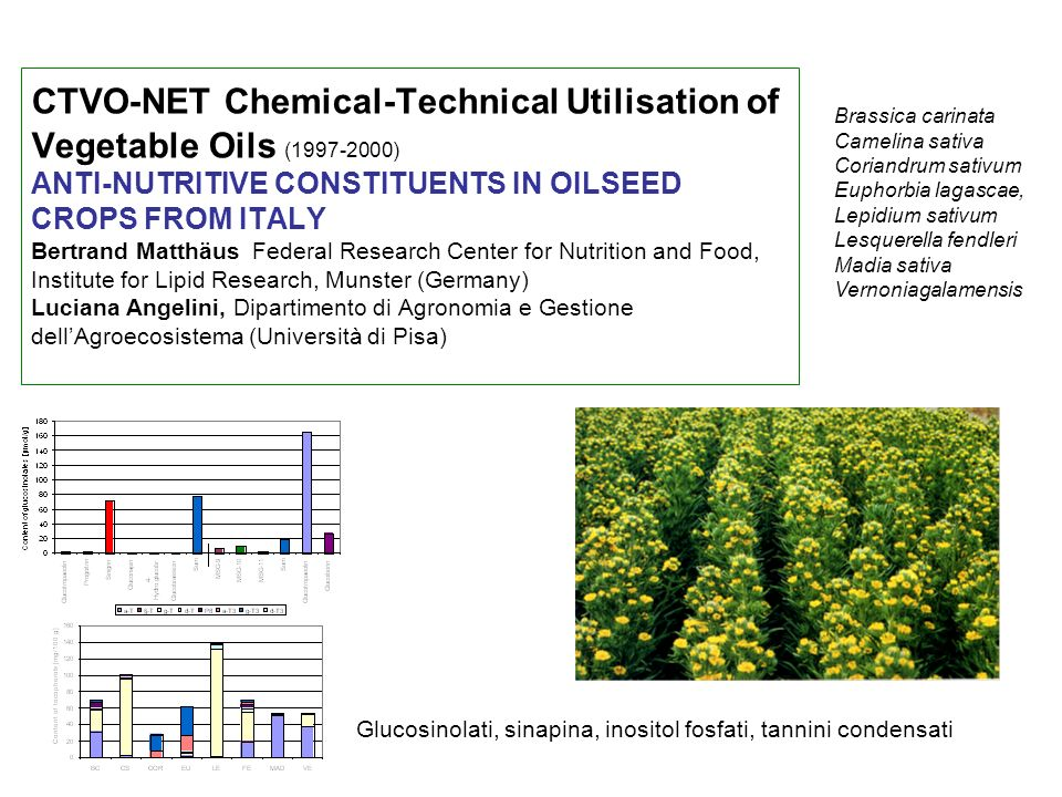 CTVO-NET Chemical-Technical Utilisation of Vegetable Oils (1997-2000) ANTI-NUTRITIVE CONSTITUENTS IN OILSEED CROPS FROM ITALY Bertrand Matthäus Federal Research Center for Nutrition and Food, Institute for Lipid Research, Munster (Germany) Luciana Angelini, Dipartimento di Agronomia e Gestione dell'Agroecosistema (Università di Pisa)