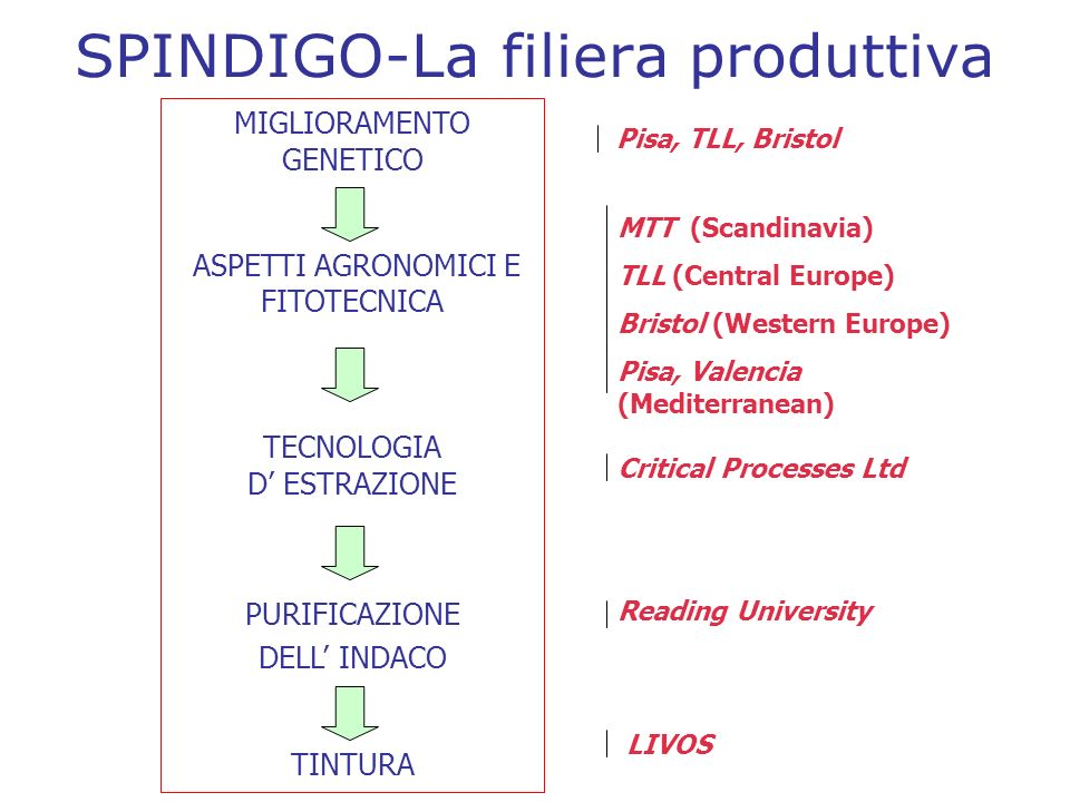 SPINDIGO-La filiera produttiva