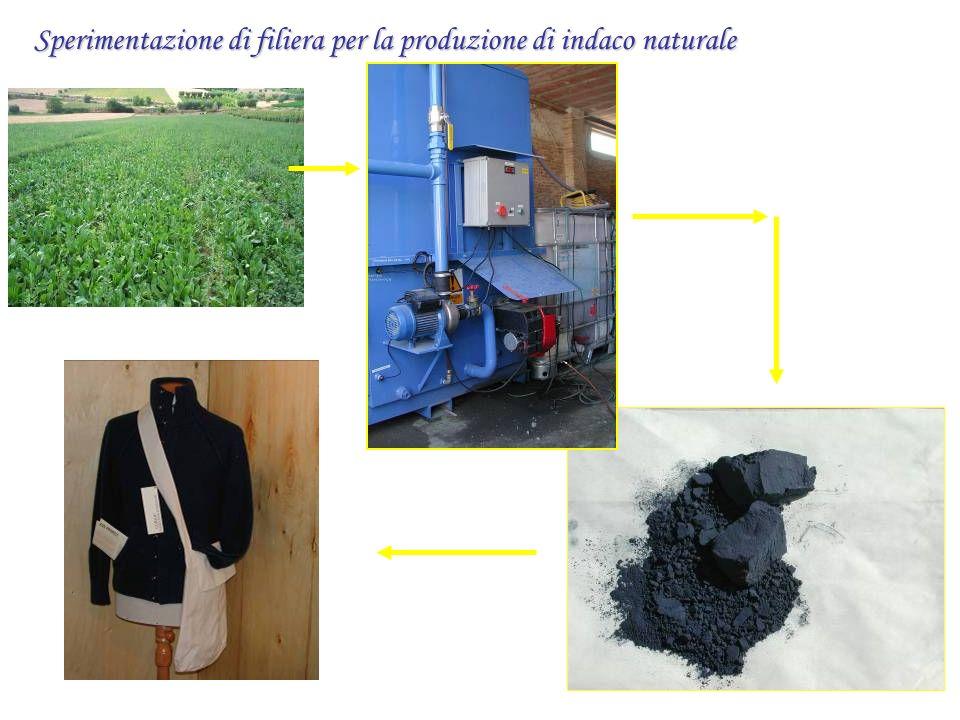 Sperimentazione di filiera per la produzione di indaco naturale