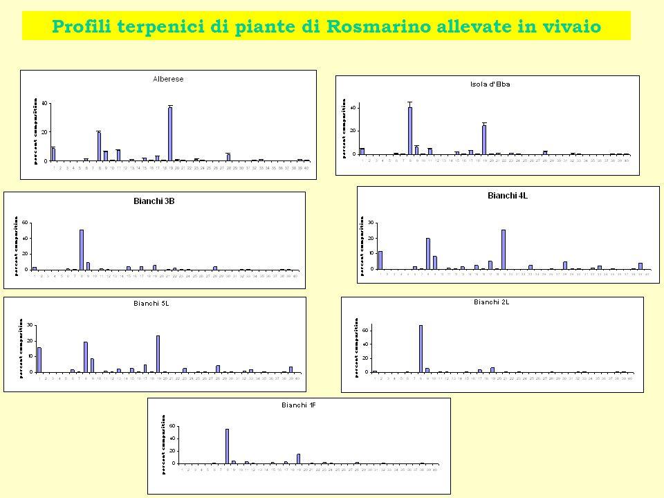 Profili terpenici di piante di Rosmarino allevate in vivaio