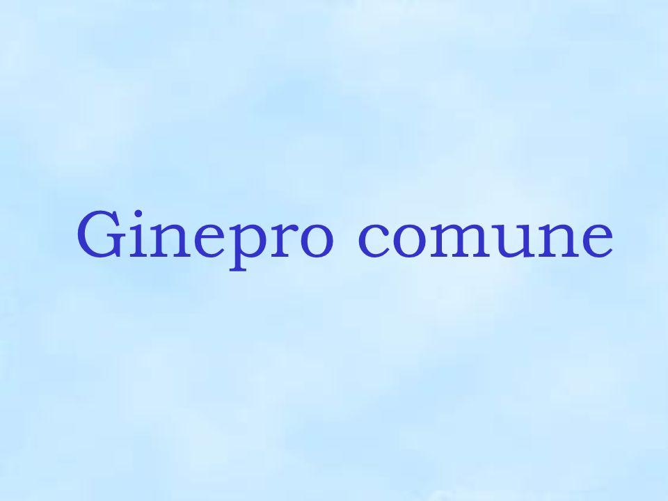 Ginepro comune