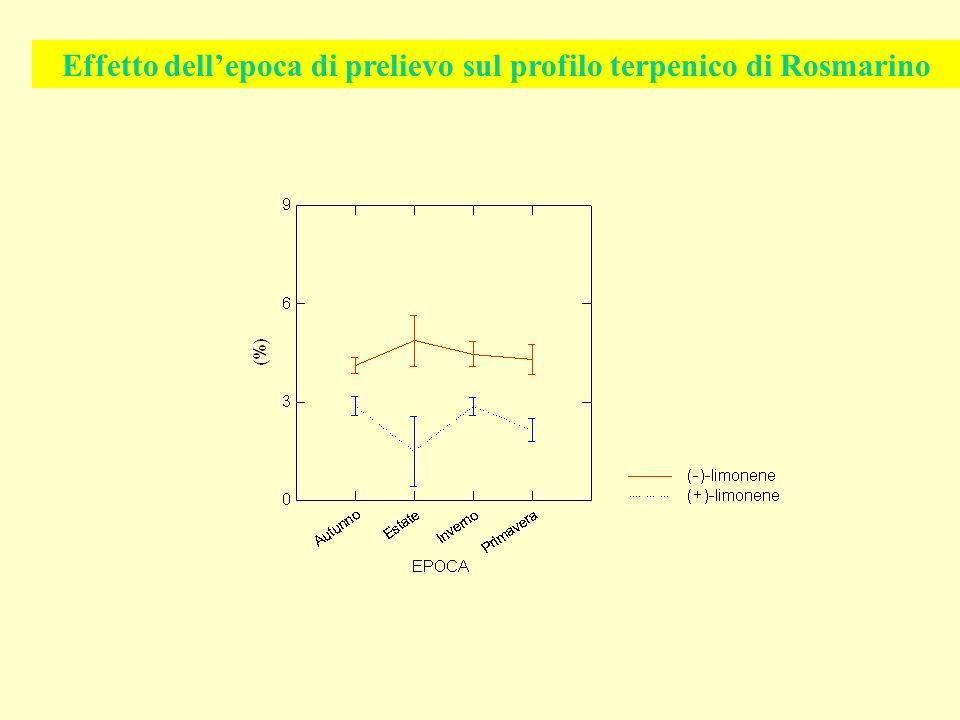 Effetto dell'epoca di prelievo sul profilo terpenico di Rosmarino
