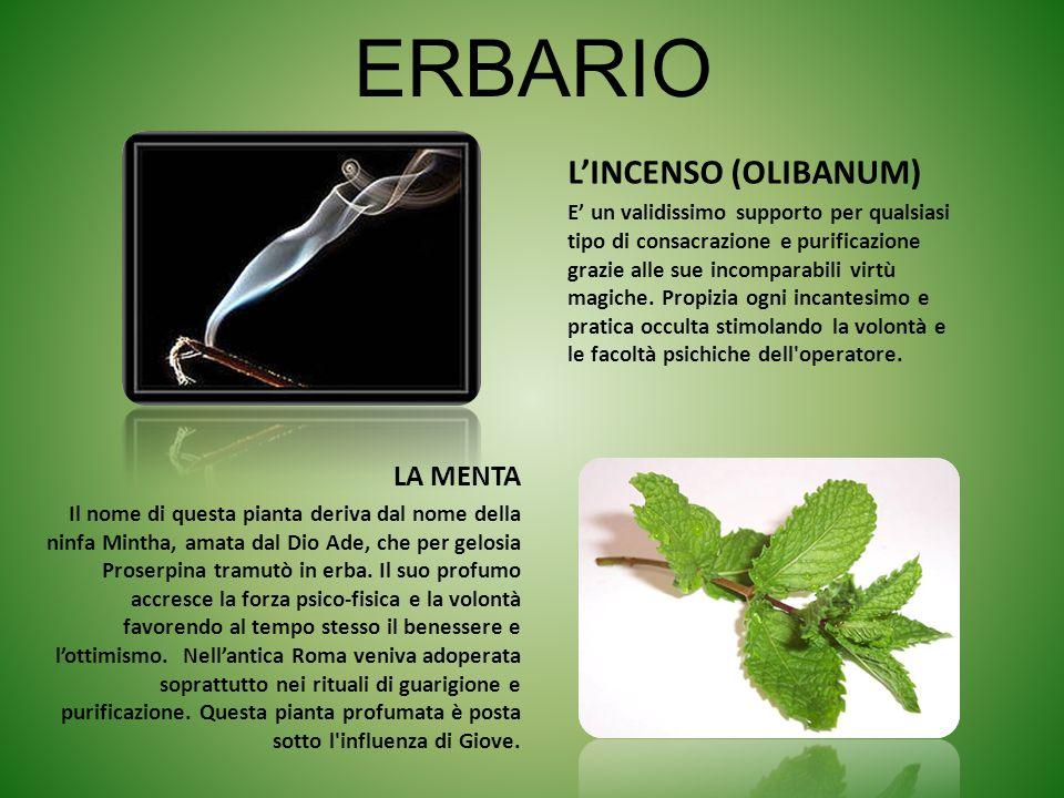 ERBARIO L'INCENSO (OLIBANUM) LA MENTA
