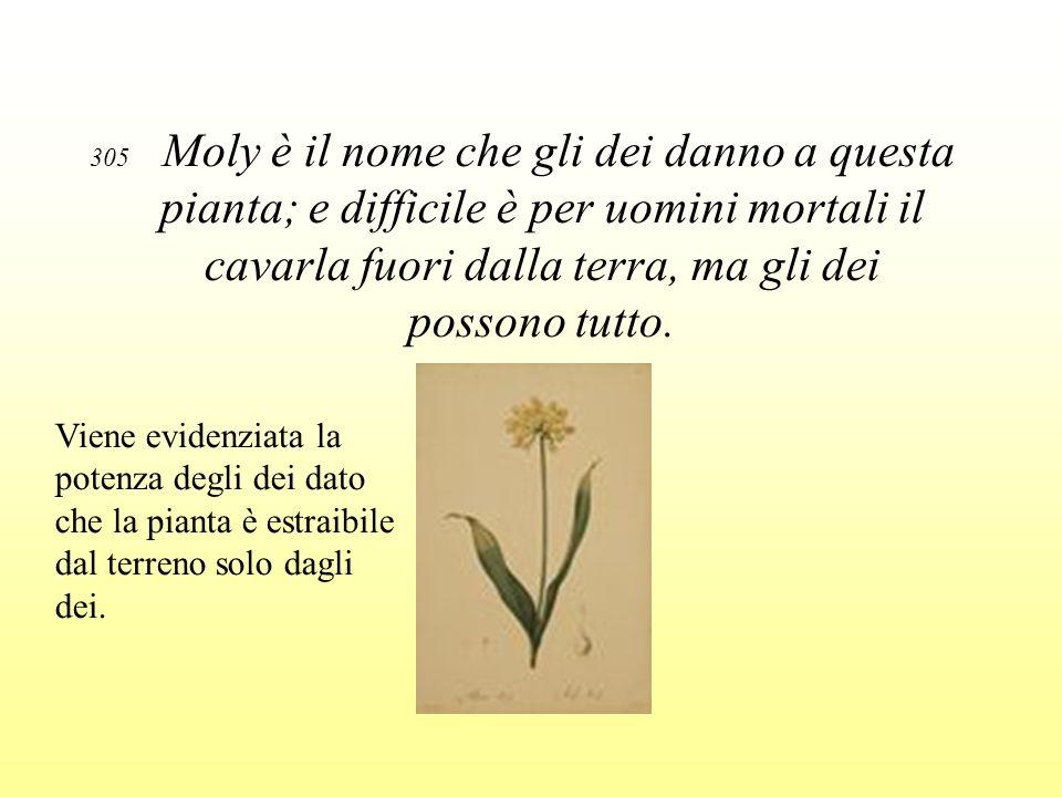 305 Moly è il nome che gli dei danno a questa pianta; e difficile è per uomini mortali il cavarla fuori dalla terra, ma gli dei possono tutto.