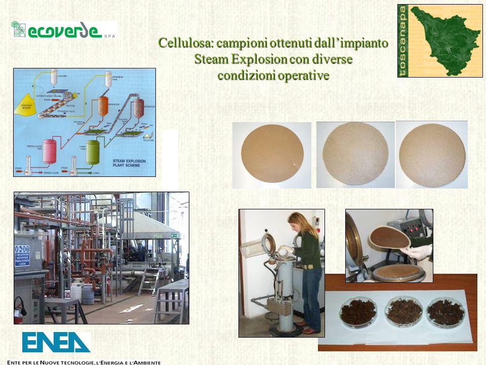 Cellulosa: campioni ottenuti dall'impianto Steam Explosion con diverse condizioni operative