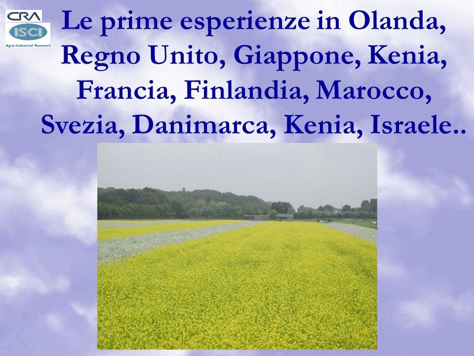 Le prime esperienze in Olanda, Regno Unito, Giappone, Kenia, Francia, Finlandia, Marocco, Svezia, Danimarca, Kenia, Israele..