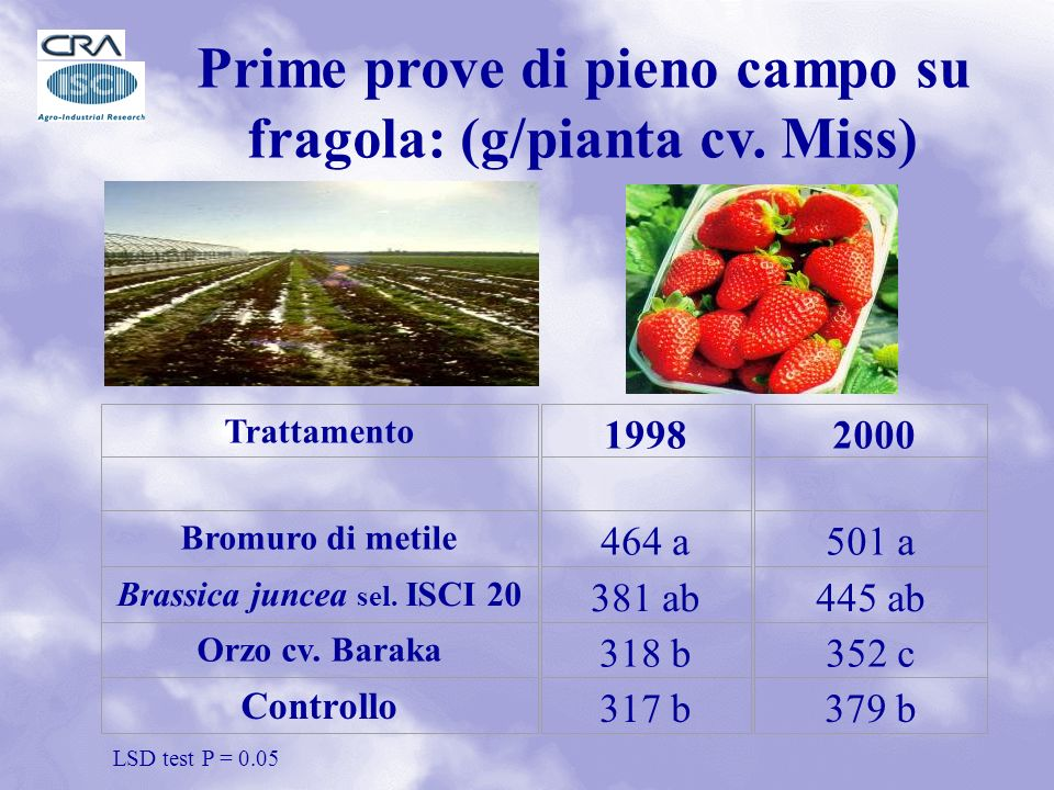 Prime prove di pieno campo su fragola: (g/pianta cv. Miss)