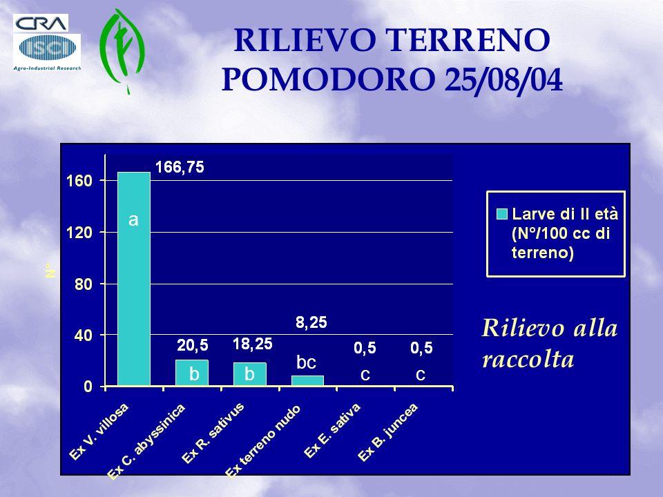 RILIEVO TERRENO POMODORO 25/08/04