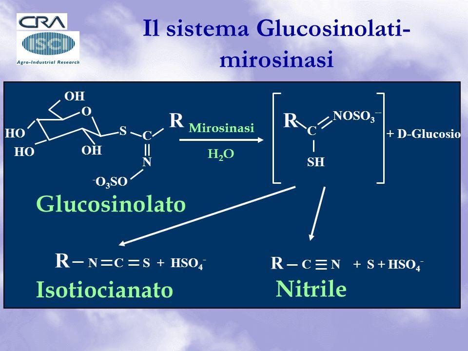 Il sistema Glucosinolati-mirosinasi