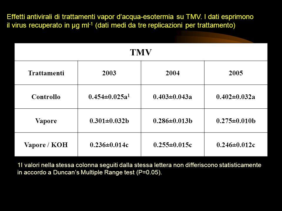 Effetti antivirali di trattamenti vapor d'acqua-esotermia su TMV