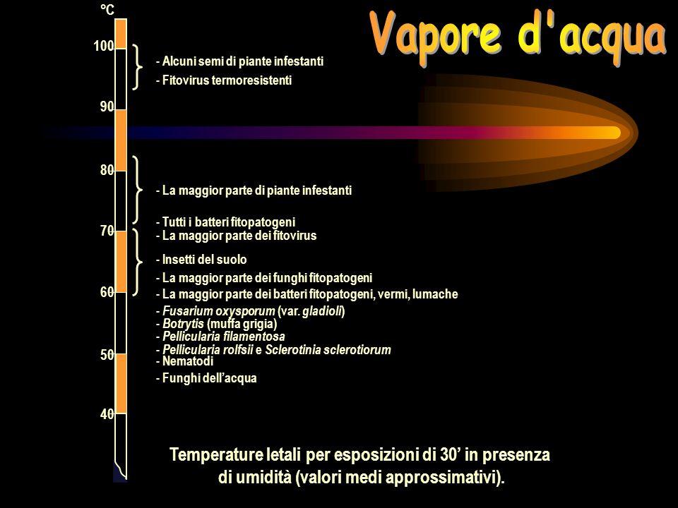 Vapore d acqua Temperature letali per esposizioni di 30' in presenza