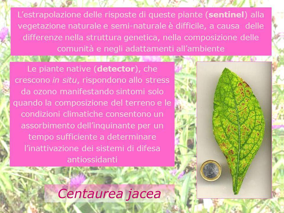 L'estrapolazione delle risposte di queste piante (sentinel) alla vegetazione naturale e semi-naturale è difficile, a causa delle differenze nella struttura genetica, nella composizione delle comunità e negli adattamenti all'ambiente