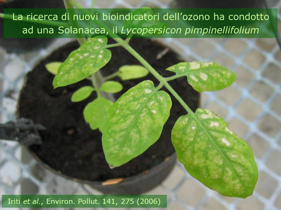 Iriti et al., Environ. Pollut. 141, 275 (2006)