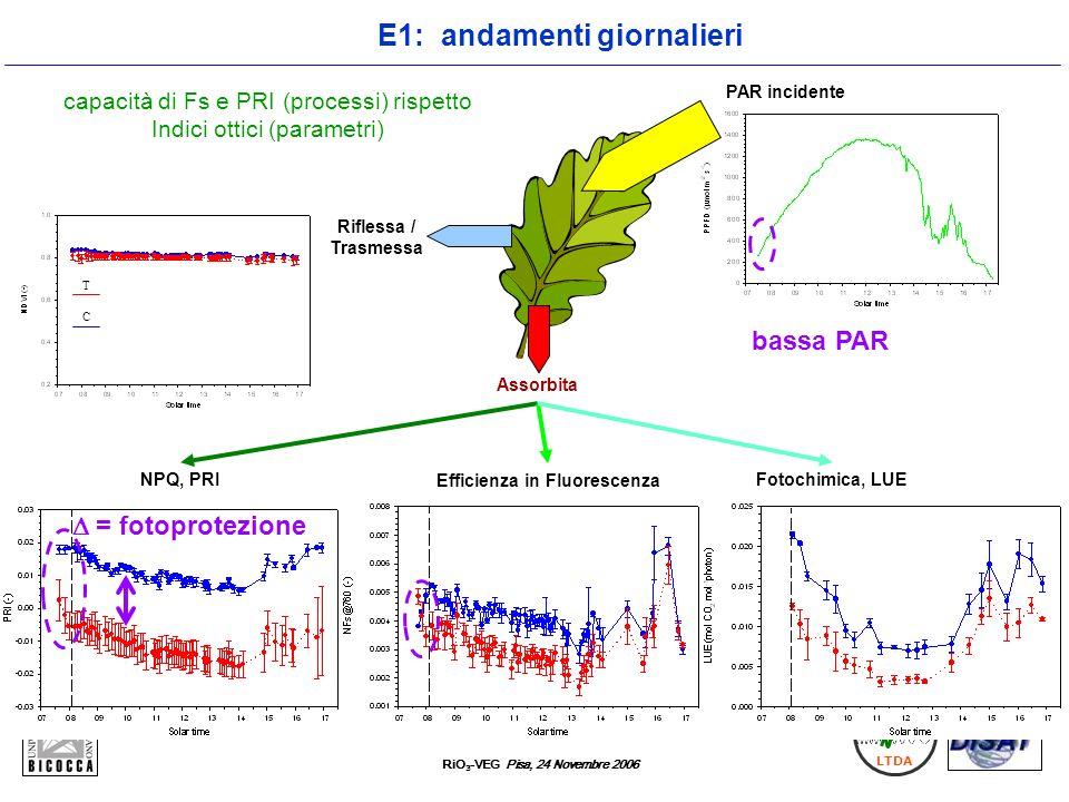 E1: andamenti giornalieri Efficienza in Fluorescenza