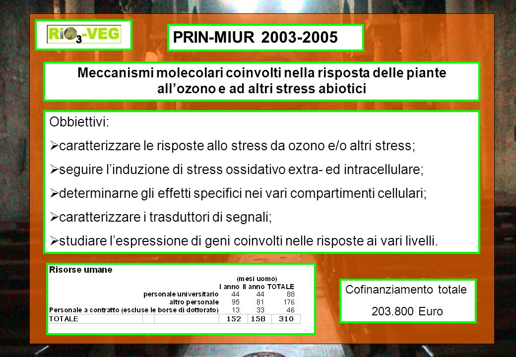 PRIN-MIUR 2003-2005 Meccanismi molecolari coinvolti nella risposta delle piante all'ozono e ad altri stress abiotici.