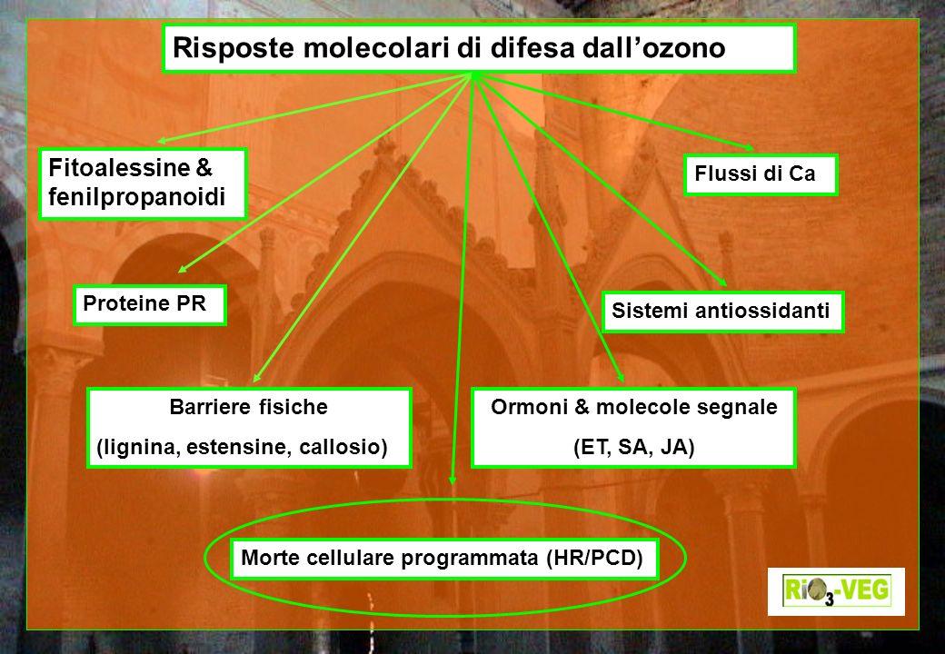 Ormoni & molecole segnale