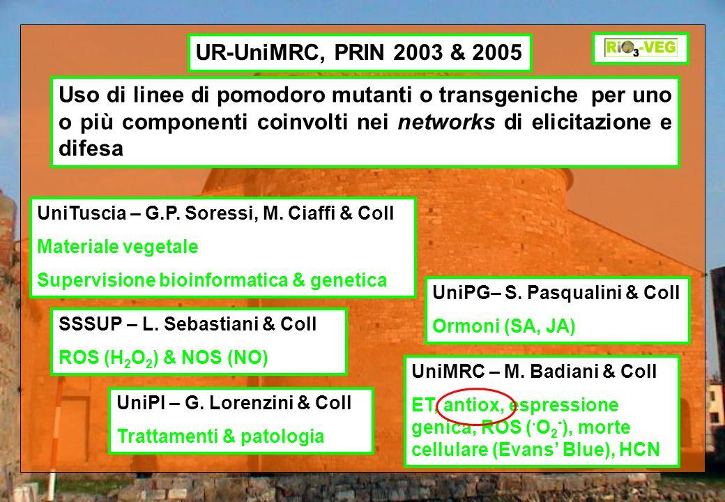 UR-UniMRC, PRIN 2003 & 2005 Uso di linee di pomodoro mutanti o transgeniche per uno o più componenti coinvolti nei networks di elicitazione e difesa.