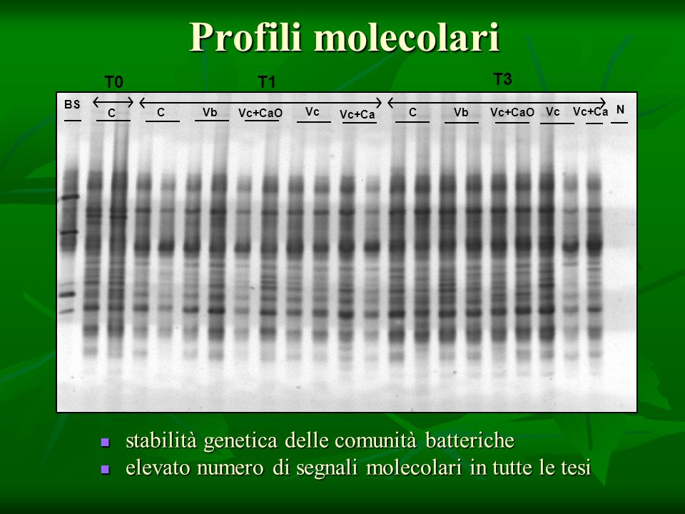 Profili molecolari stabilità genetica delle comunità batteriche