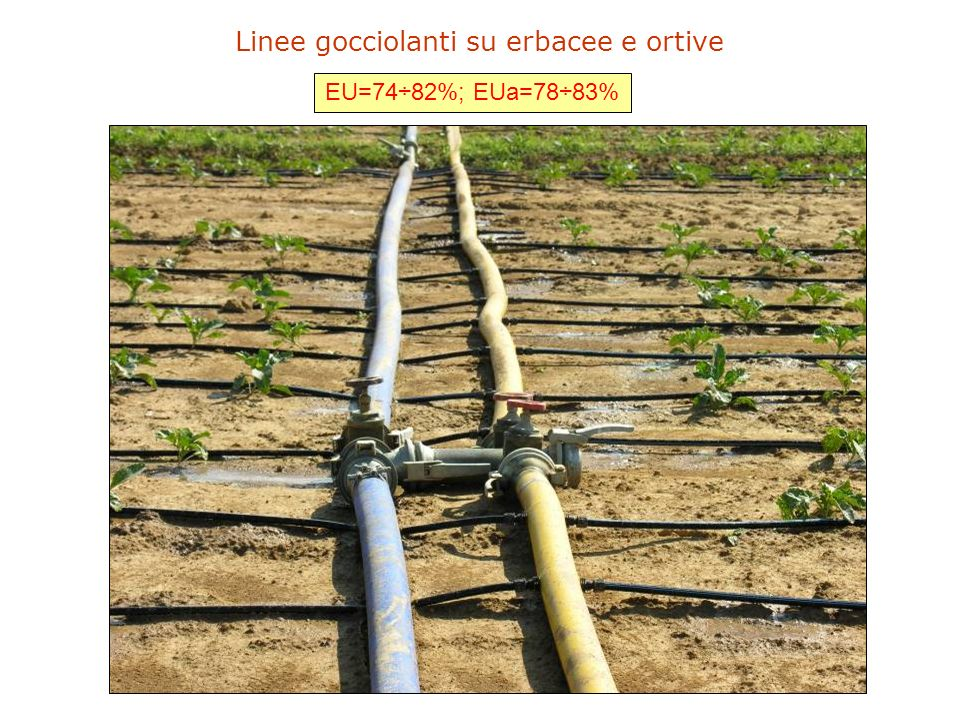 Linee gocciolanti su erbacee e ortive