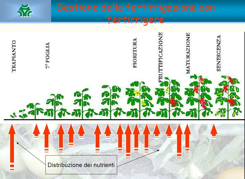 Gestione della fertirrigazione con fertirrigere