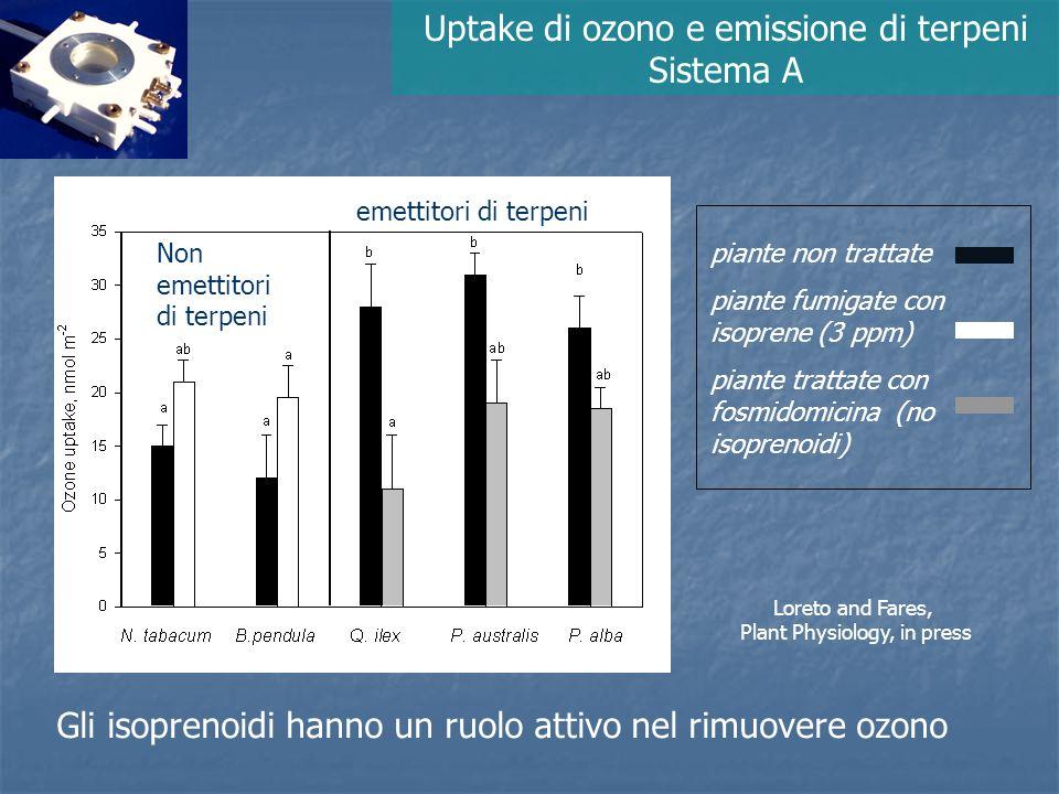 Uptake di ozono e emissione di terpeni Sistema A