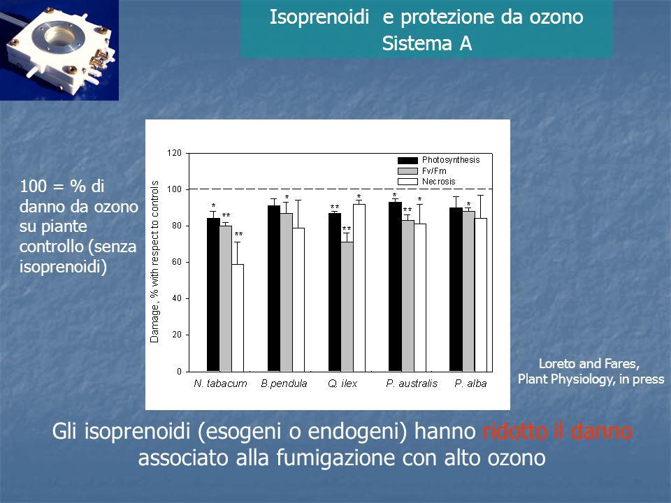 Isoprenoidi e protezione da ozono Sistema A