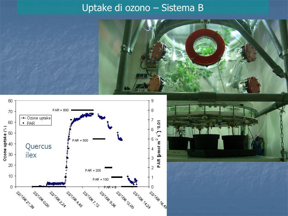 Uptake di ozono – Sistema B