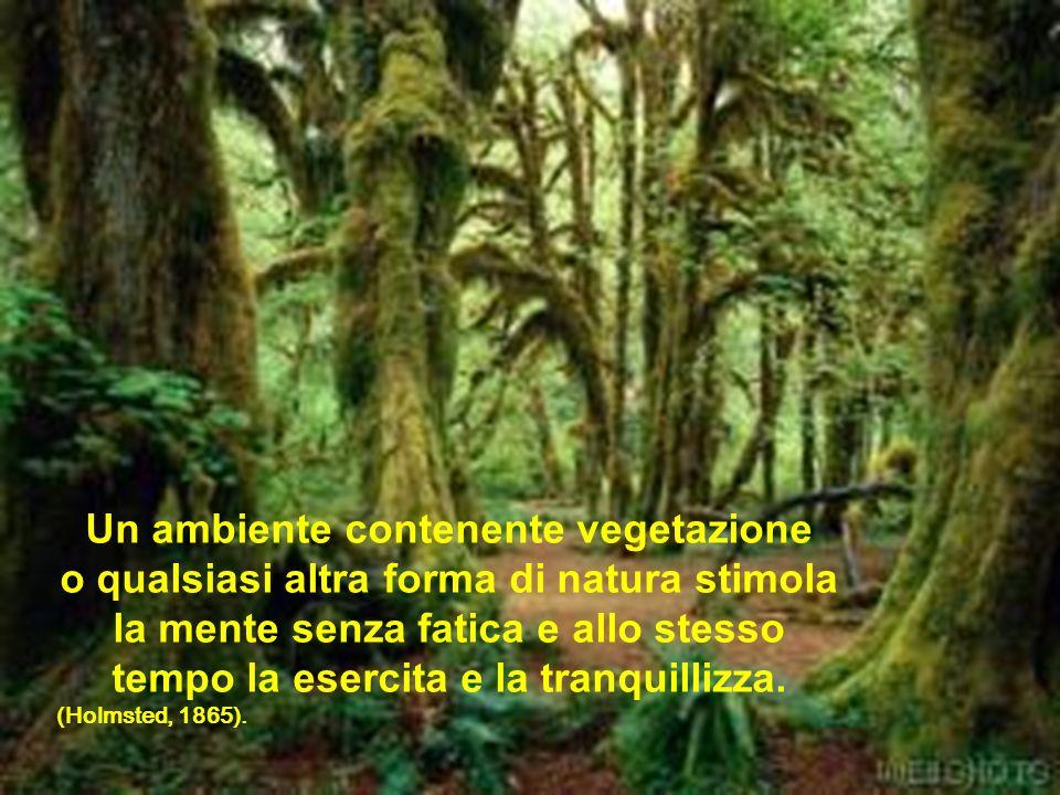 Un ambiente contenente vegetazione