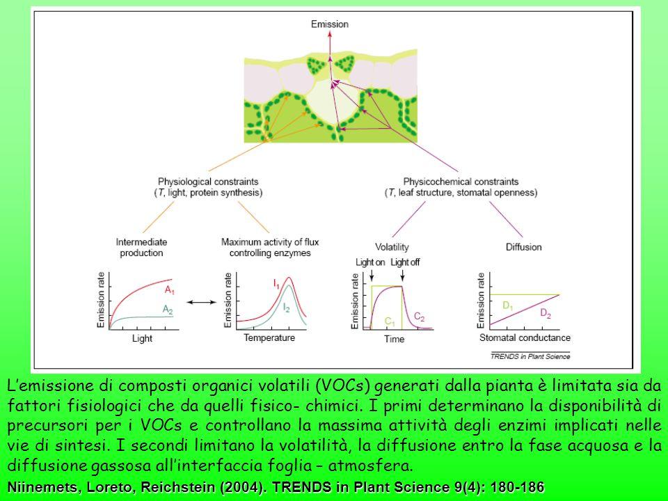 L'emissione di composti organici volatili (VOCs) generati dalla pianta è limitata sia da fattori fisiologici che da quelli fisico- chimici. I primi determinano la disponibilità di precursori per i VOCs e controllano la massima attività degli enzimi implicati nelle vie di sintesi. I secondi limitano la volatilità, la diffusione entro la fase acquosa e la diffusione gassosa all'interfaccia foglia – atmosfera.